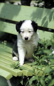 Puppy by Gerd Pfeiffer