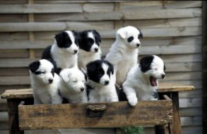 Puppies in a drawer I by Gerd Pfeiffer