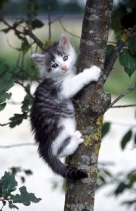 Kitten climbing a tree by Gerd Pfeiffer