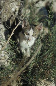 Kitten by Gerd Pfeiffer