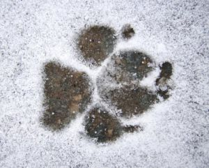 Dog pawprint in the snow by Rosseforp