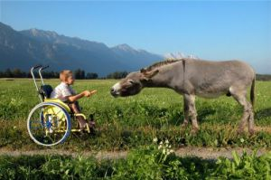 Boy in a wheelchair feeding a donkey by Thomas Hupfauf
