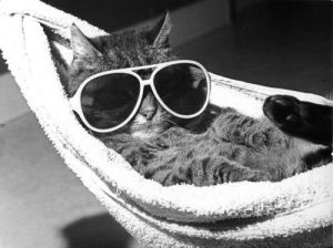 Cat with sunglasses in a hammock by Rüdiger Poborsky