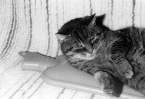 Cat lying on hot-water bottle 2 by Rüdiger Poborsky