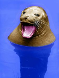 Seal with open mouth by Walter Sittig