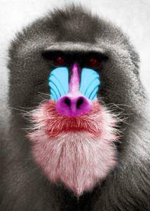 Baboon by Jochen Köhler