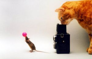 Cat photographing a mouse by Franz Gradwohl