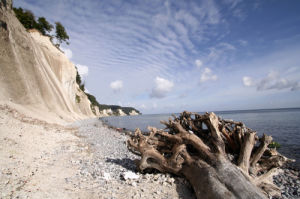 Tree trunk on the chalk coast of Rügen by Heinz Krimmer