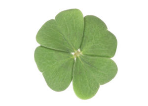 Four-leaf clover I by Rosseforp