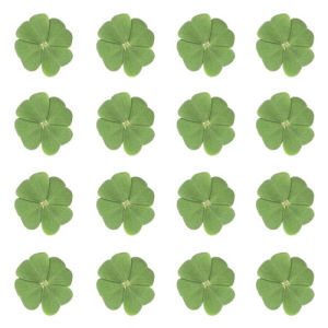 Four-leaf clover III by Rosseforp