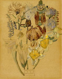 Mont Louis - Flower Study, 1925. by Charles Rennie Mackintosh