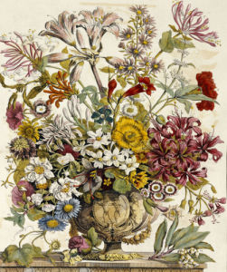Hand Colored Engraving Of Bouquet- October, 'Twelve Months Of Flowers', 1730. by Robert Furber