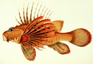 The Most Remarkable and Interesting Fishes Found on the Coast of Ceylon by John Whitchurch Bennett