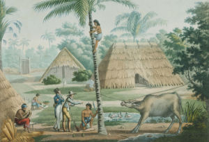 Timor Island, Indonesia; A View In The Vicinity Of Coupang, 1817 by Louis de Freycinet