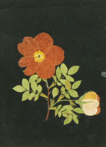 Cut Out Of A Flower, C. 1783 by Margaret Nash