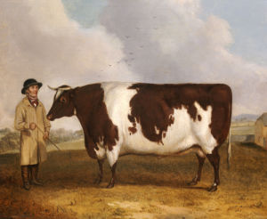 A Prize Friesian Bull With A Cowherd In A Landscape by Richard Whitford