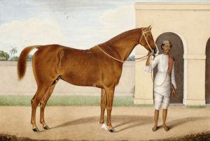 Jeremy Jumps, A Chestnut Stallion by Shaikh Muhammad Amir Of Karraya