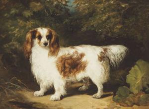 A Blenheim Cavalier King Charles Spaniel, 1836 by H. Willis