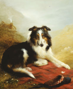 A Collie, The Guardian Of The Flock, 1908 by Edwin Douglas