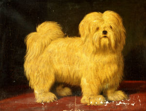 A Bichon Frise by English School