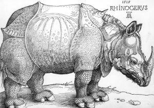 The Rhinoceros, 1515 by Albrecht Dürer