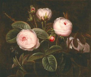 Pink Roses by Johan Laurents Jensen