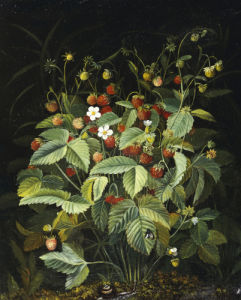 Wild Strawberries by Otto Diderich Ottesen