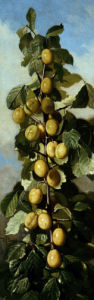 Chinese Plums by Edward C. Leavitt