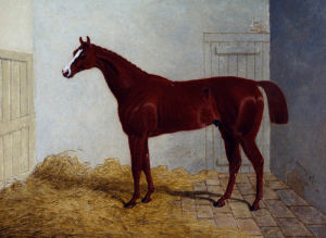 Lord Chesterfield's Bay Colt Zinganee In Stalls by John Frederick Herring