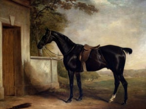 Portrait Of Buckle, First Lord Chesham's Hunter by John Ferneley