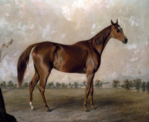 Asteroid At Stud by Edward Troye