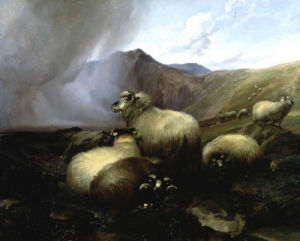 Highland Sheep In A Mountainous Landscape by Thomas Sidney Cooper