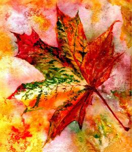 Falling maple leaf by Luisa Gaye Ayre