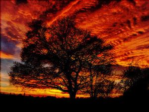 Red sky at night by Luisa Gaye Ayre