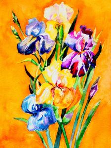 Iris in the sun by Luisa Gaye Ayre
