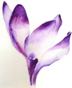 Crocus by Luisa Gaye Ayre