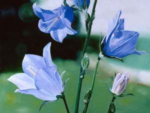 Campanula by James Knowles