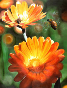 Calendula by James Knowles
