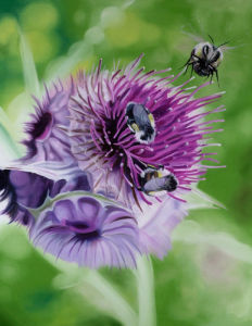 Wild Thistles by James Knowles