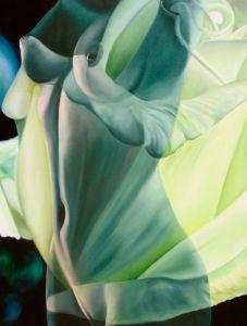 Primavera Seis by James Knowles