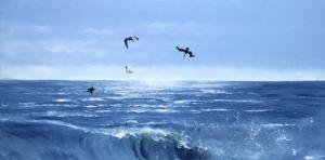 Pelicanos de Melaque by James Knowles
