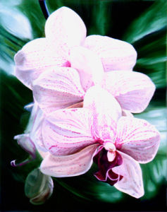 Orchid by James Knowles