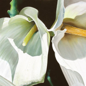 Two Arums by James Knowles