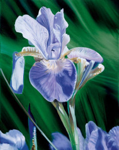 Iris by James Knowles