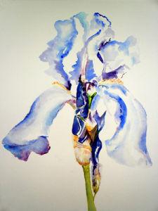 Iris Blue by Luisa Gaye Ayre