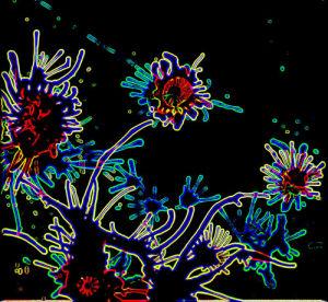 Midnight flowers by Luisa Gaye Ayre