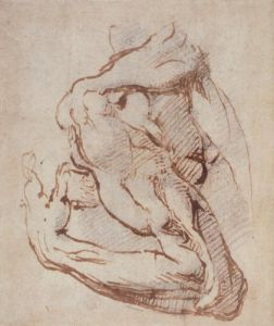 Study of an Arm by Michelangelo
