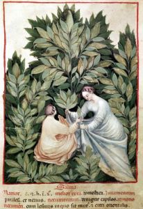 Two women picking sage by Italian School