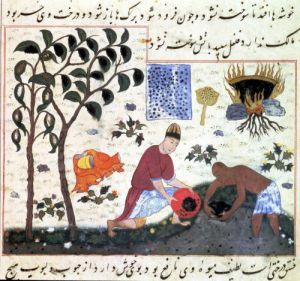 Pepper tree and preparing pepper by Persian School