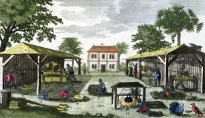The Colonial Household illustration from 'Histoire des Antilles' by French School